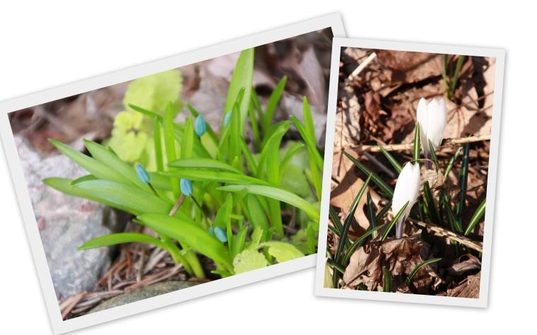 2014 spring blog3