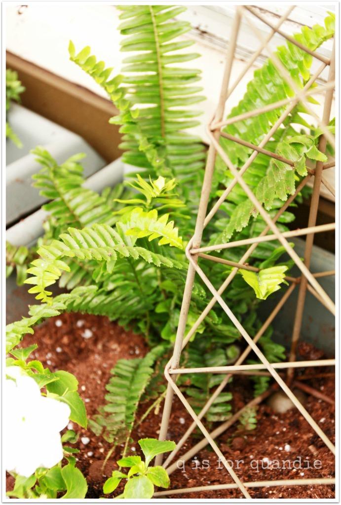 spring window box fern