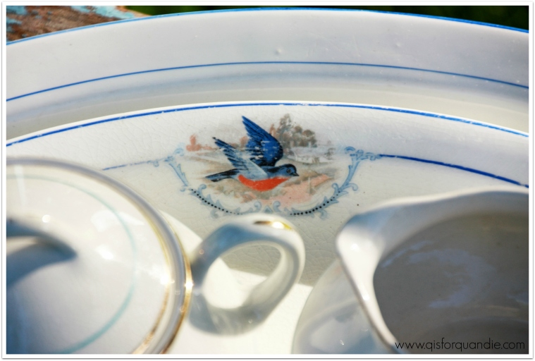 bluebird china closeup