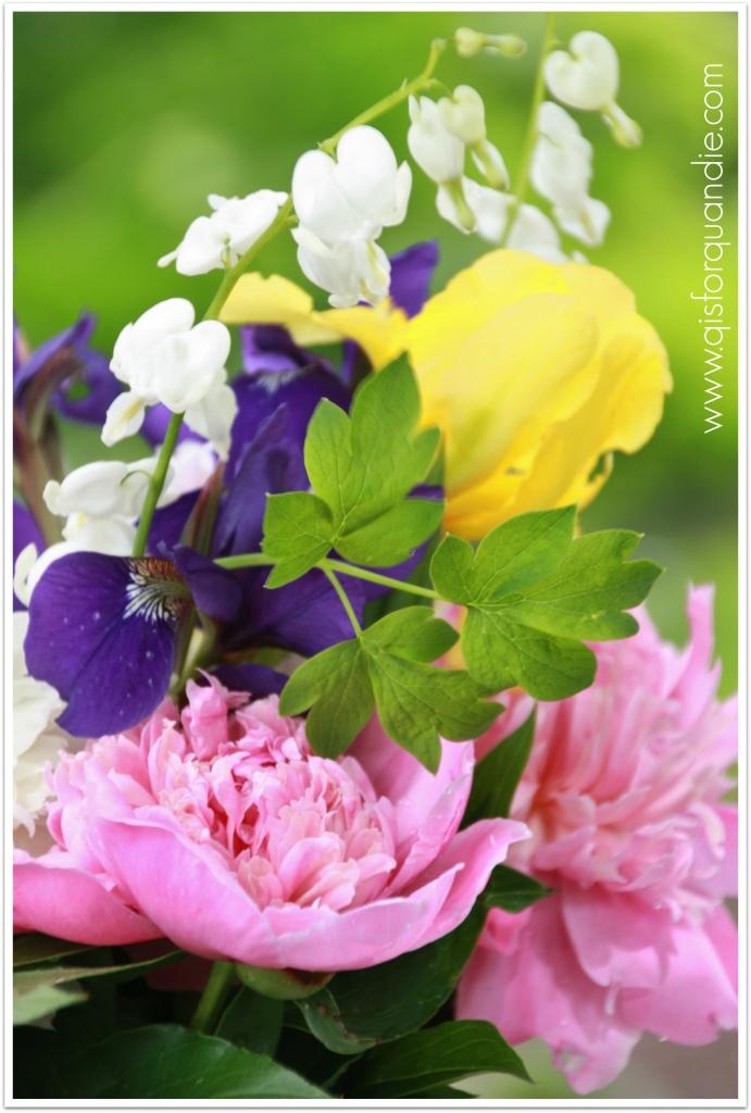 cutting garden yellow iris