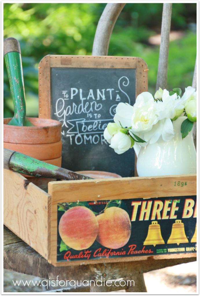 plant peonies