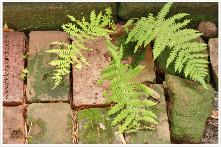 Sue's mossy bricks