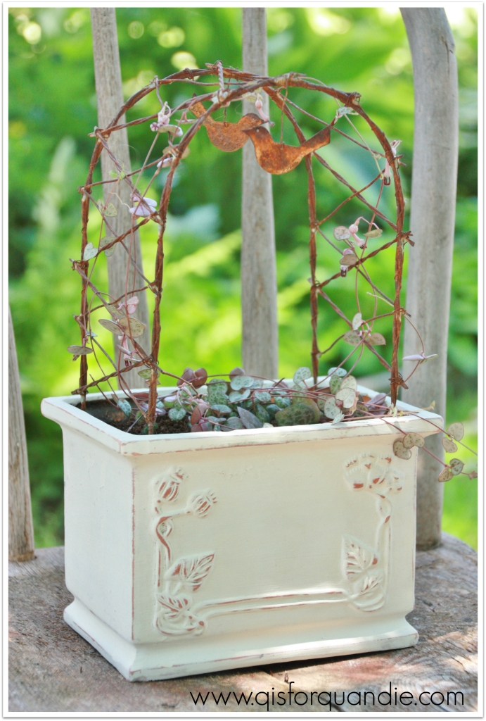 tiny vine after