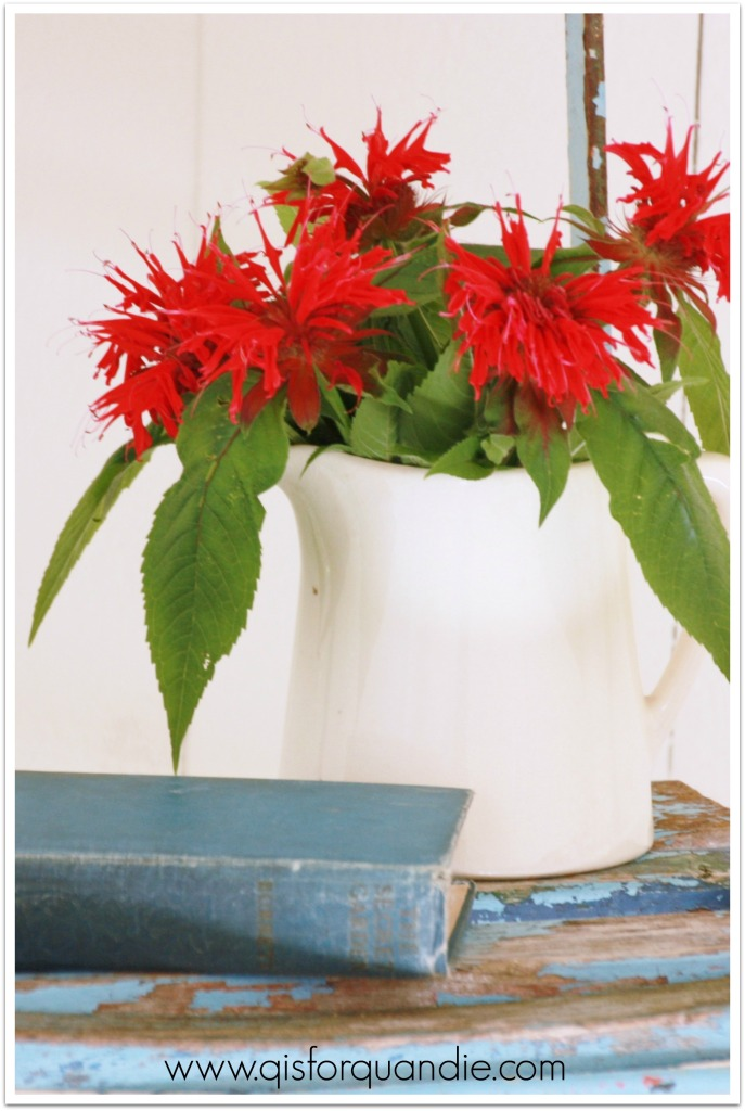photo studio bee balm