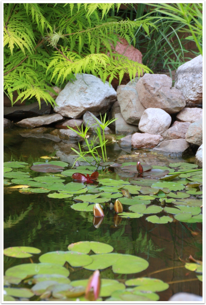 nnk water plants