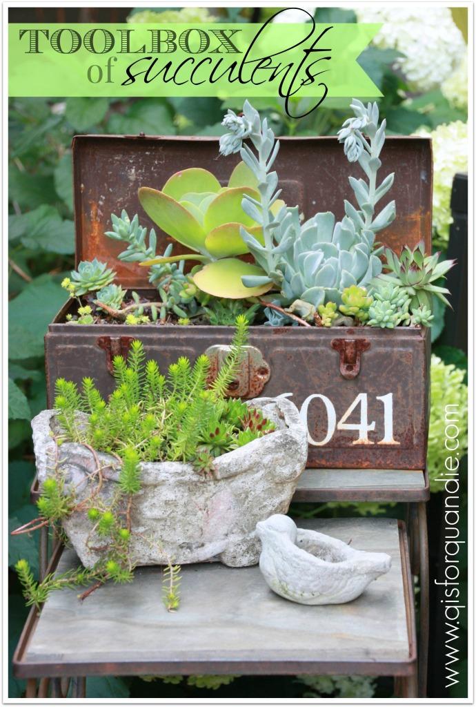 succulent toolbox