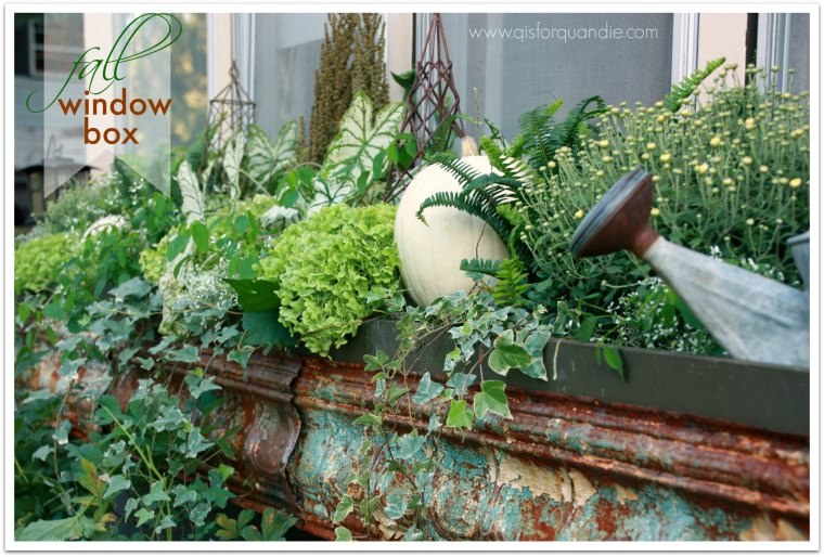 fall window box title