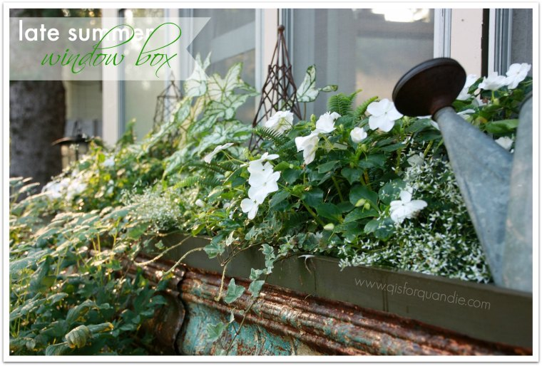 late summer window box 2