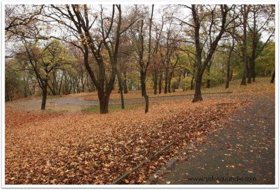 Gellert woods