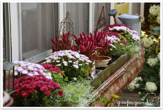 window box 1