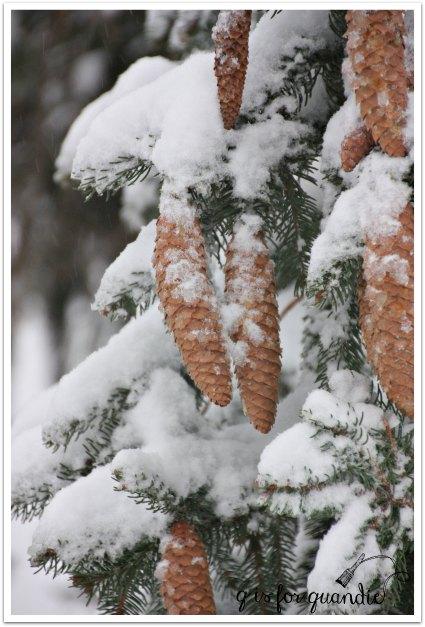 farm snowy pine