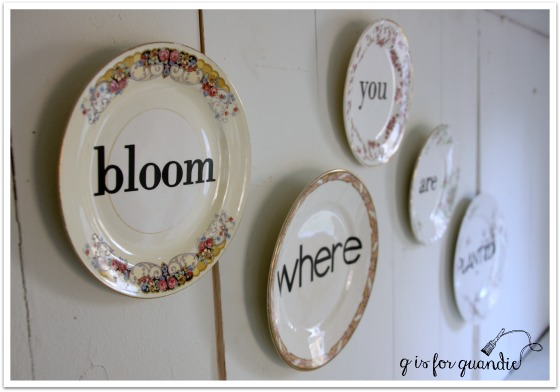 bloom plates 1