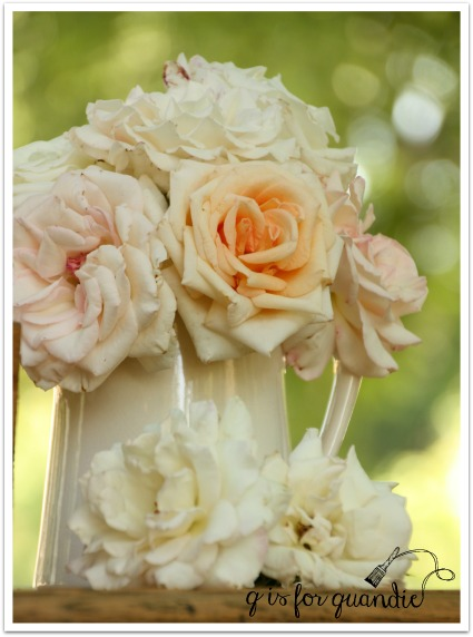 arlene's roses