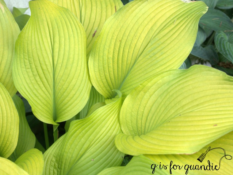 sunpower hosta